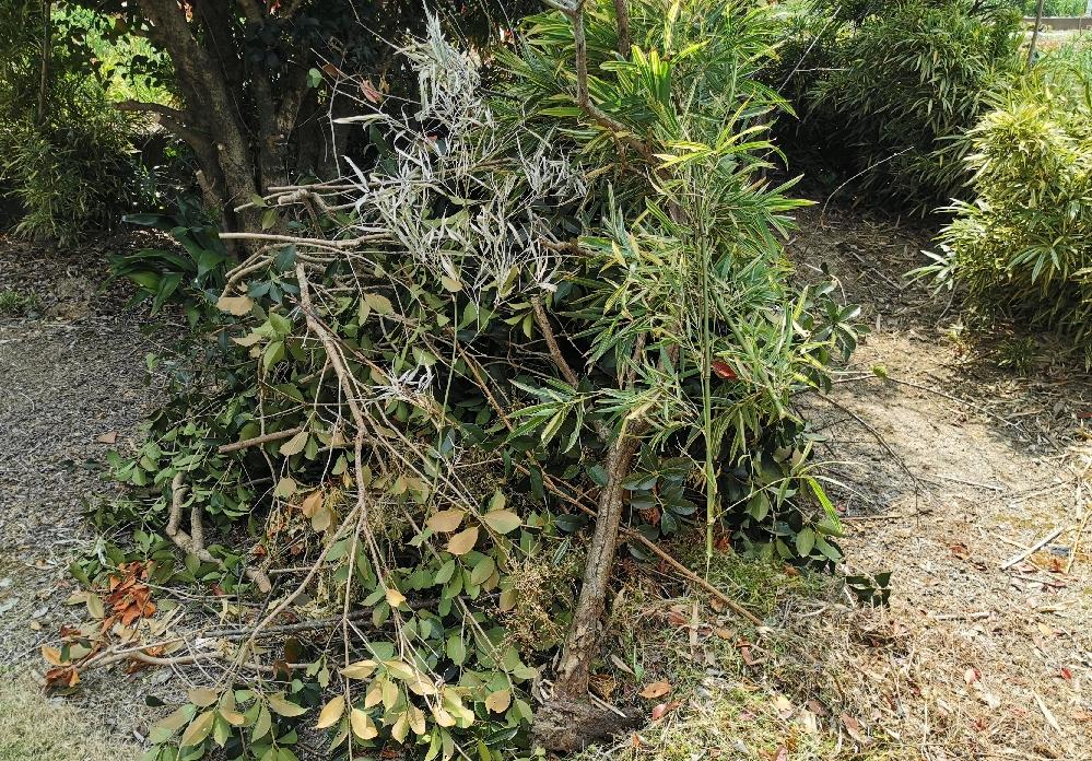 伐採後の残骸