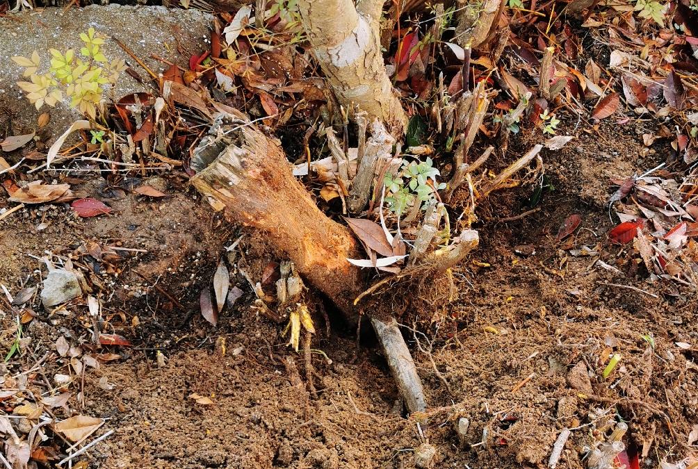 木の根と石ころ